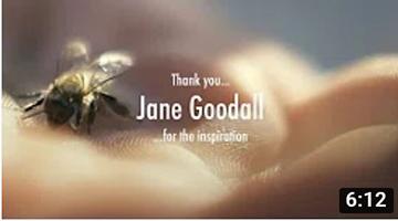 JANE GOODALL – Mother Earth