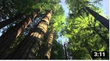 Planet Earth 10 Seasonal Forests 2006 1080p HDDVD x264 anoXmous