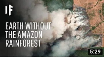 What If We Lost The Amazon Rainforest?