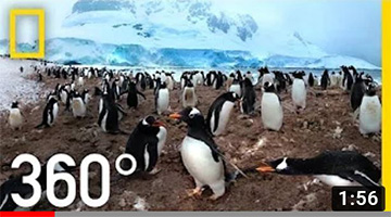 360° Antarctica – Unexpected Snow | National Geographic