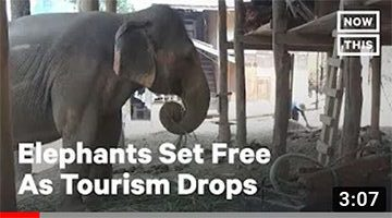 70+ Carrier Elephants Set Free During Coronavirus Crisis | NowThis