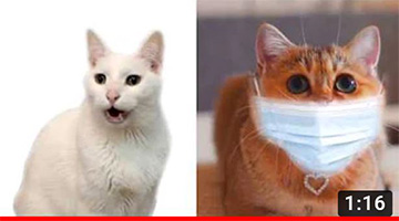 Meow CORONA – Coronavirus Cat Parody